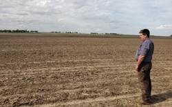 A soybean farmer looks out at his field in Wilton, Iowa.