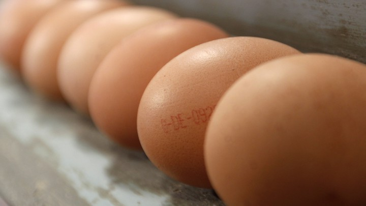 A row of chicken eggs
