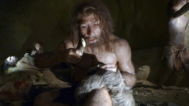 A museum exhibit shows a right-handed Neanderthal man working with a tool.