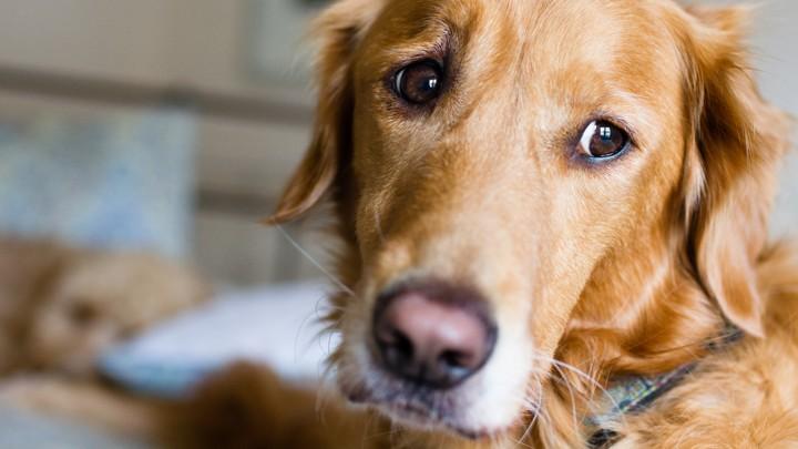 A sad dog's face