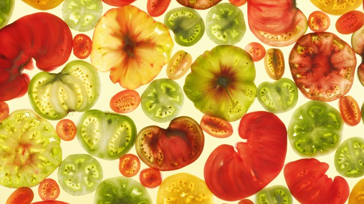 Colorful tomato slices