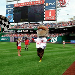 Washington Nationals mascot Teddy Roosevelt wins the presidents' race, a home game tradition at Nationals Park in Washington, D.C.