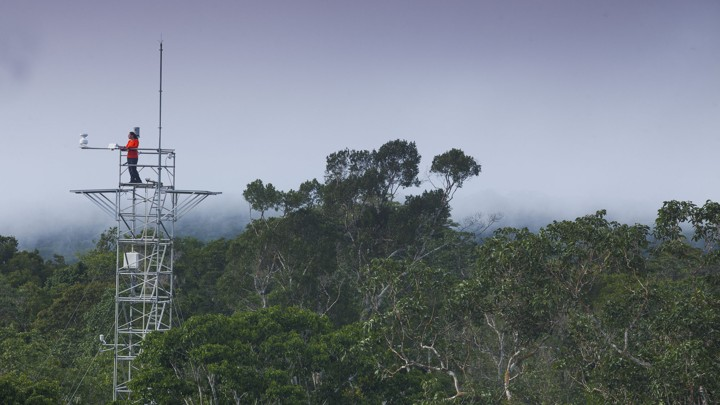 A person stands atop a tower in the Amazon.