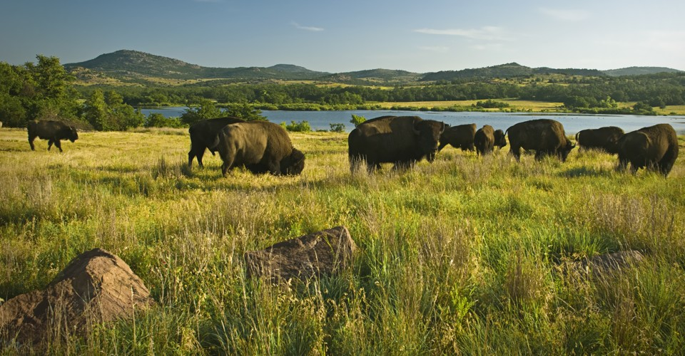 What America Lost When It Lost the Bison