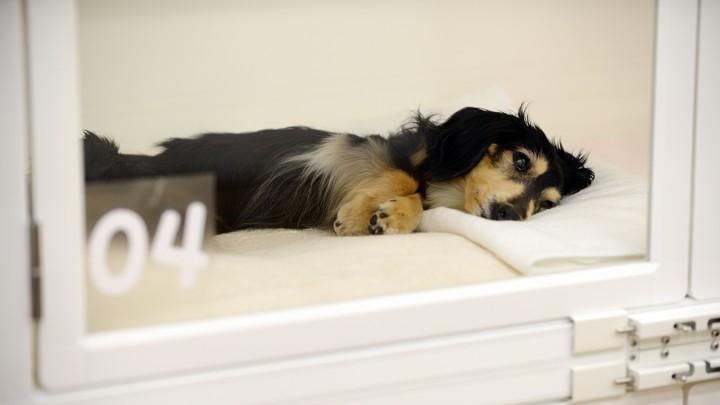 A sick puppy