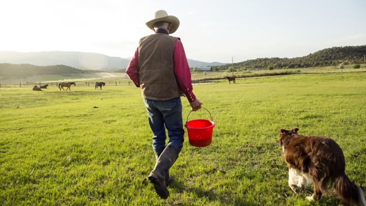 A cowboy walks with his dog to catch horses near Ignacio, Colorado.