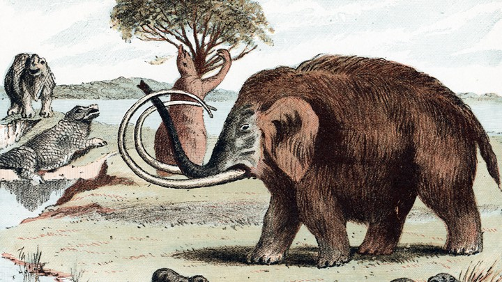 Drawing of woolly mammoth with other Pleistocene animals