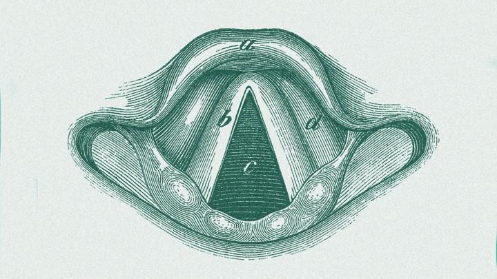 An anatomical drawing of a human larynx