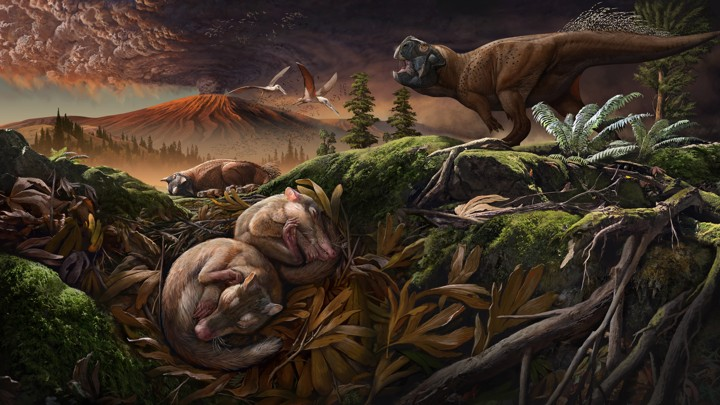 An artist's rendering of a new mammalian species found in China