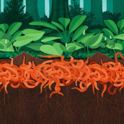 An illustration of a mass of worms beneath a forest.