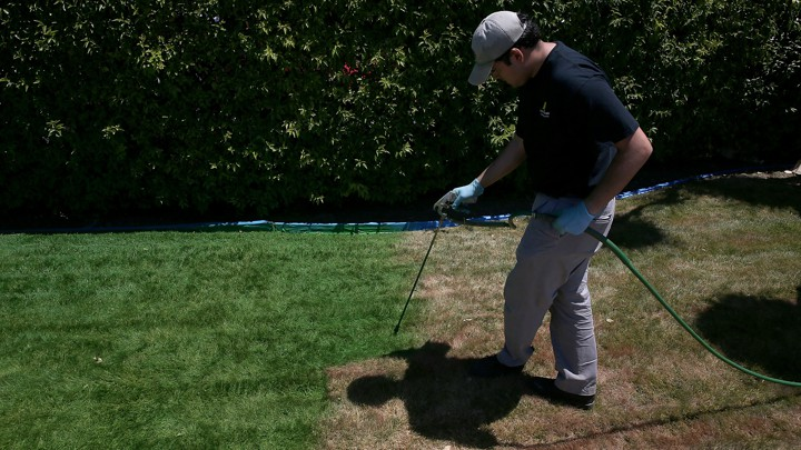 California Residents Are Painting Their Lawns Green