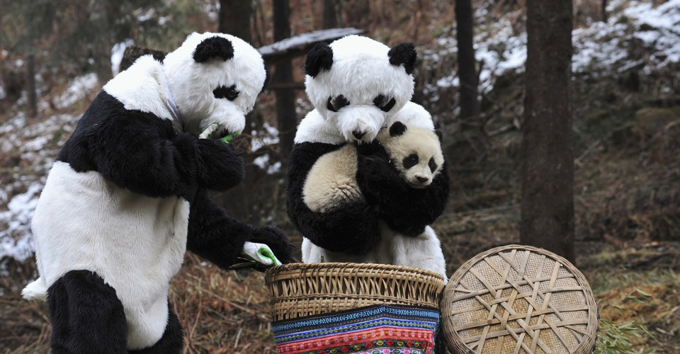 Image result for human panda suit