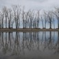 Trees are reflected in a puddle at Presque Isle State Park in Erie, Pennsylvania