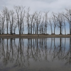 Trees are reflected in a puddle at Presque Isle State Park in Erie, Pennsylvania.