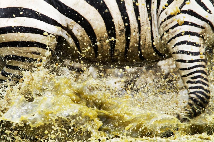 Concurso de fotografia national geographic 2011 19