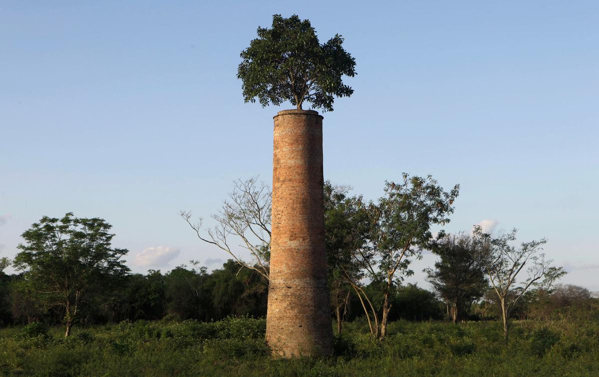 Zero tolerance in schools essays on friendship Essay on world without trees
