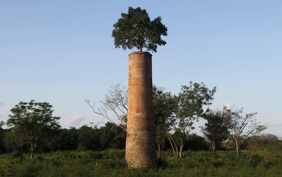 a world out people the atlantic a tree grows from the top of a chimney in an abandoned factory yard in luque on the outskirts of asuncion on 2 2011