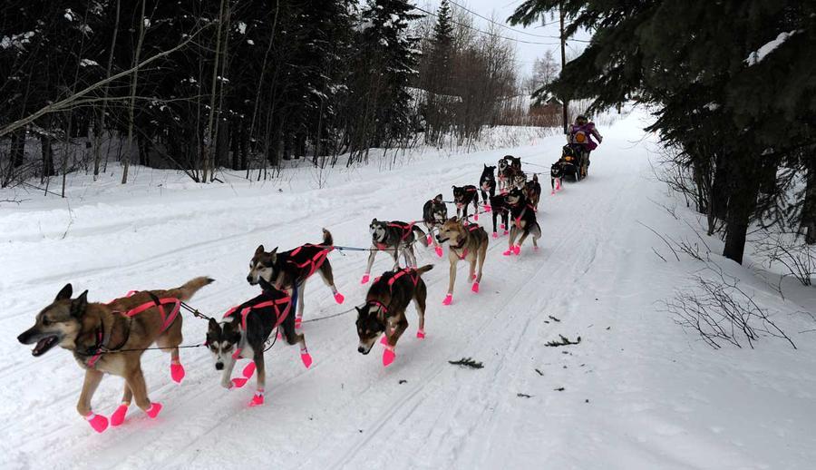 The 2012 Iditarod Trail Sled Dog Race - The Atlantic