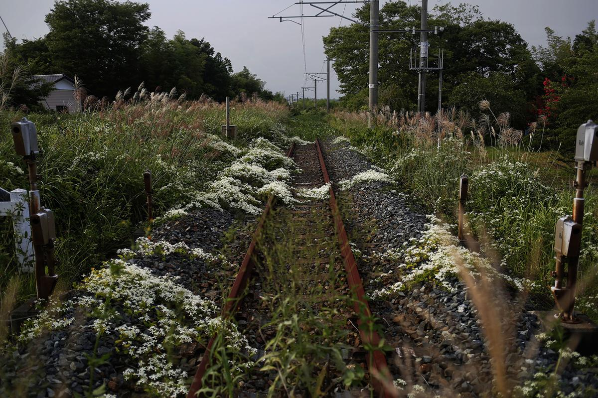 Wild flowers and other vegetation grow over a train line in the empty town of Namie, on September 14, 2013.
