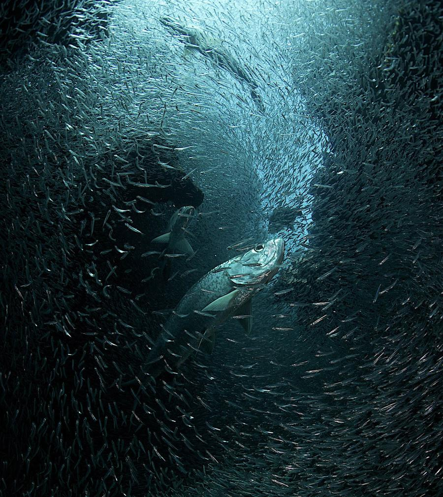 national geographic photo contest 2013 part ii the atlantic