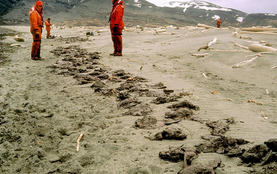 the effects of the oil spill in alaska The wrecked oil tanker exxon valdez spilling oil into prince william sound, alaska, in 1989 the effects are still being felt photograph: taken from picture library as sea ice disappears and open.