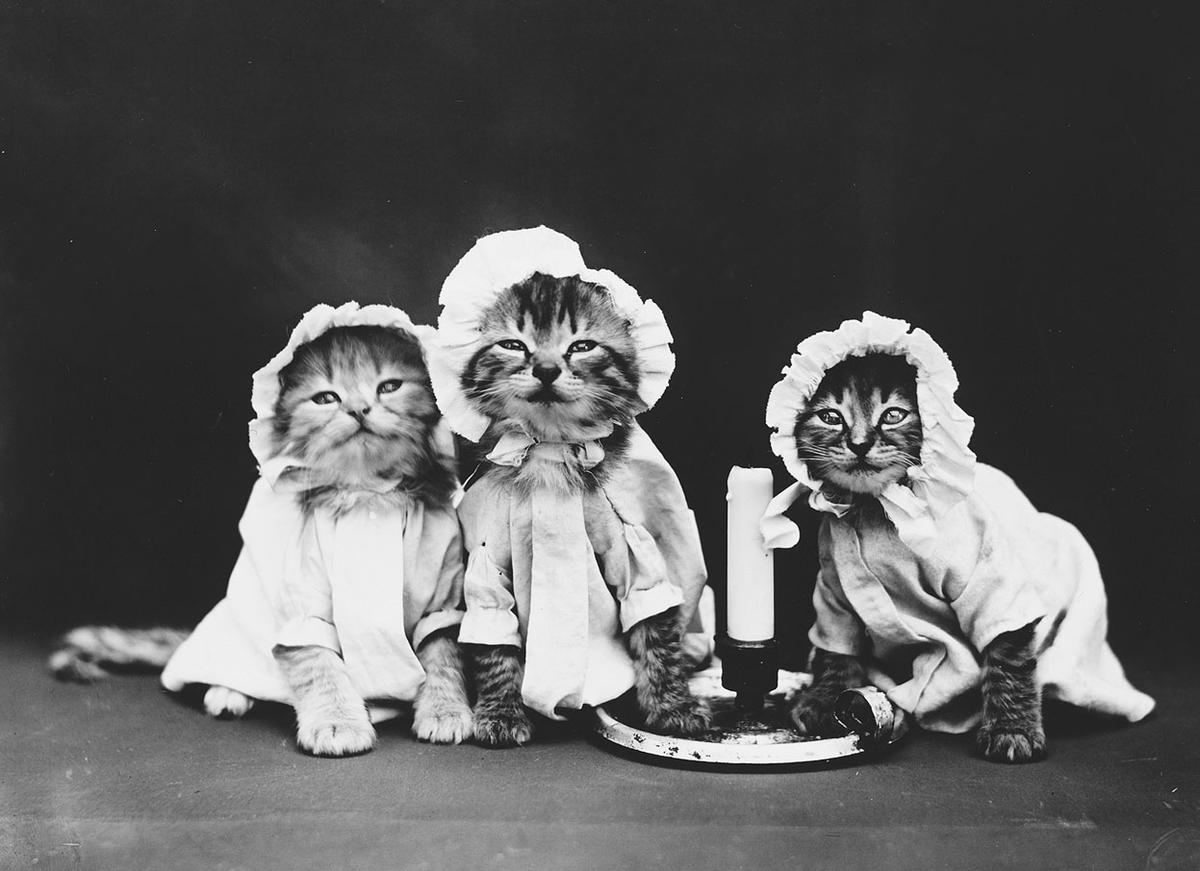 cats and dogs dressed as people 100 years ago the atlantic