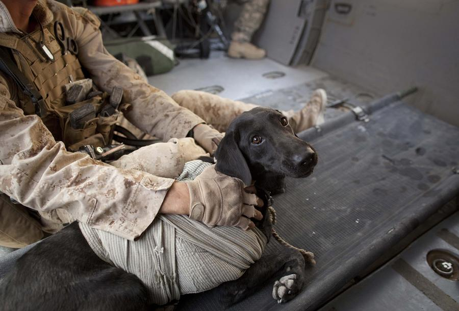 Afghanistan Dogs Of War The Atlantic