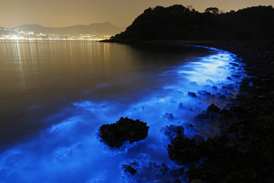 Image result for The bioluminescent bloom