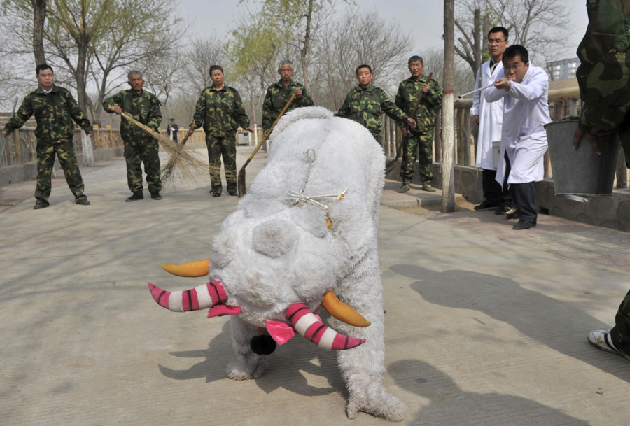 Zoo Security Drills When Animals Escape The Atlantic
