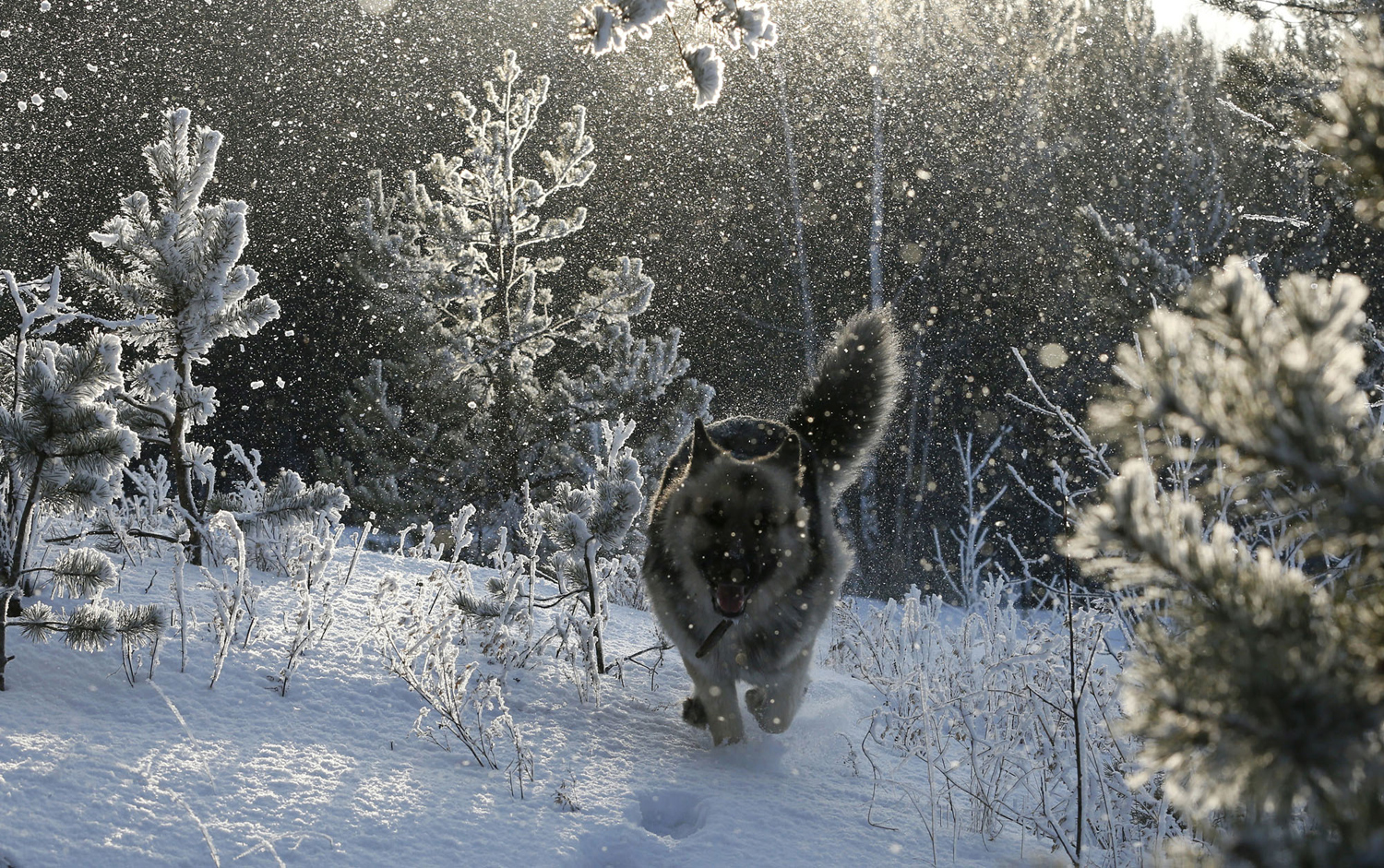 What will be the winter in Siberia in 2017-2018 61