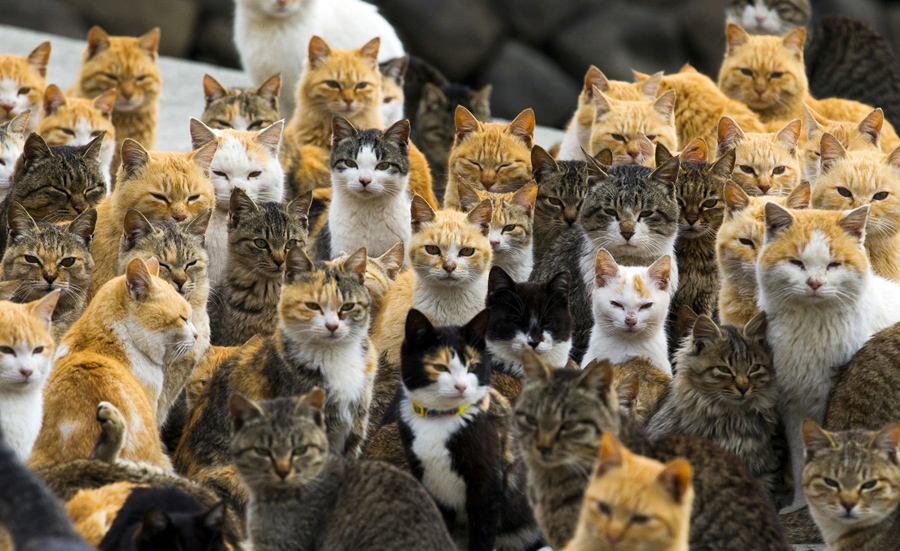 Image result for cat island japan