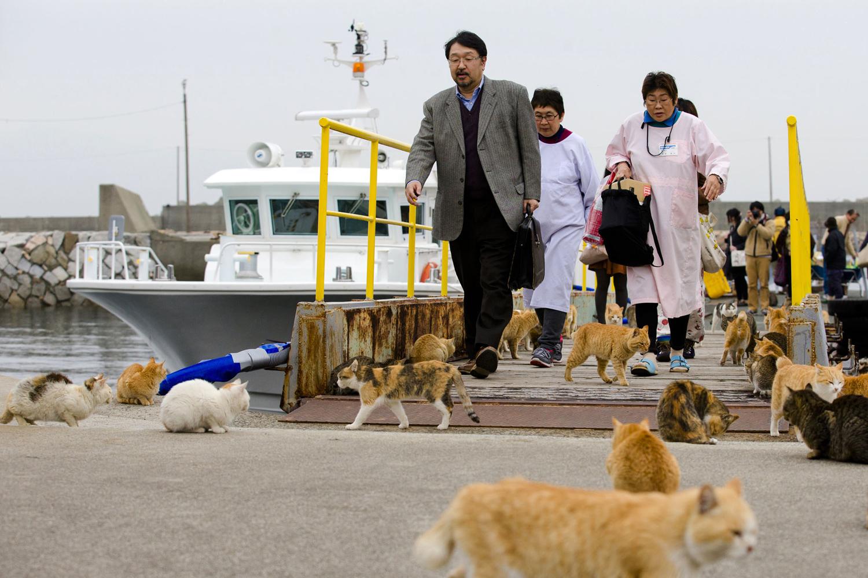 Pulau Aoshima