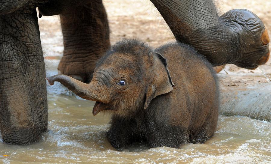 world elephant day the atlantic