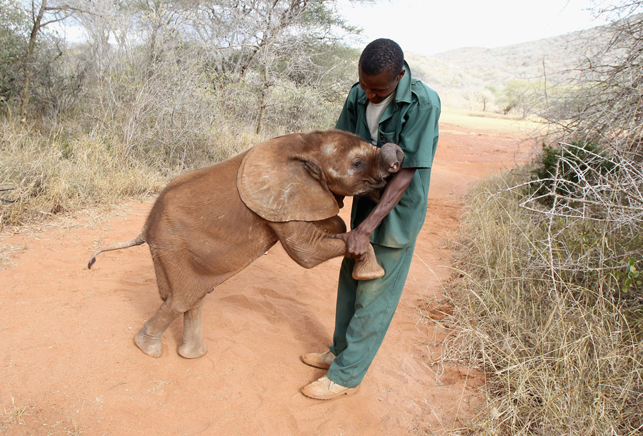 Image result for exuberant elephant pictures