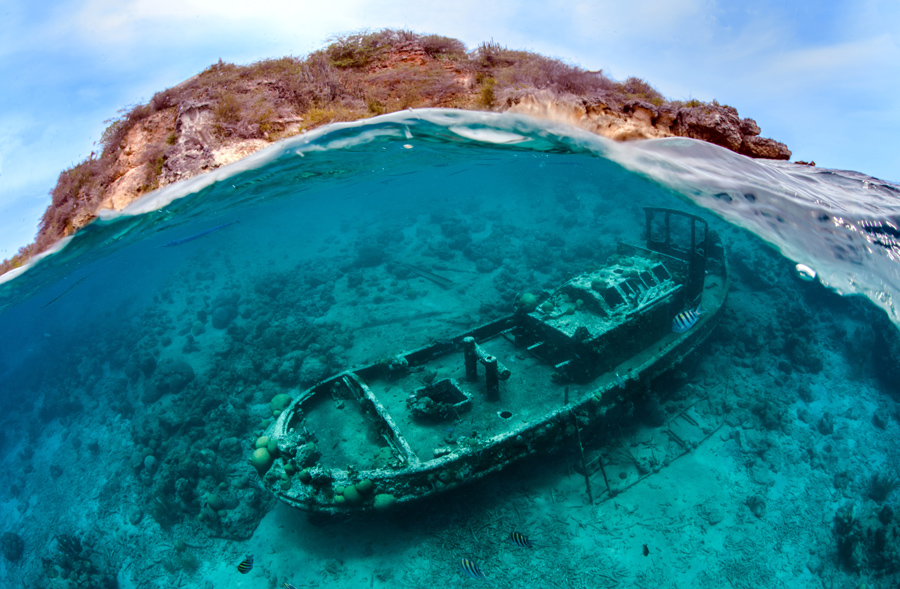 The 2016 Underwater Photographer of the Year Contest - The