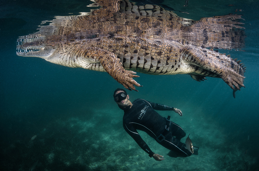 In The Mangroves Of Cuba We Had An Incredible Experience With This American Crocodile It Was Like Swimming A Dinosaur