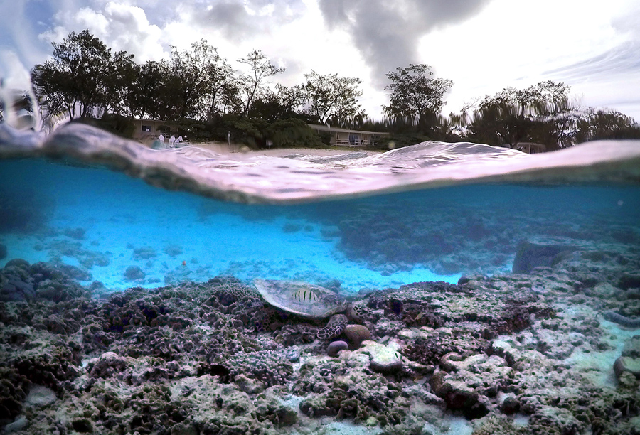 lagoon spill essay