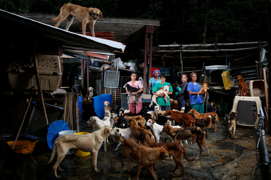 Image result for No food for pet in Venezuela