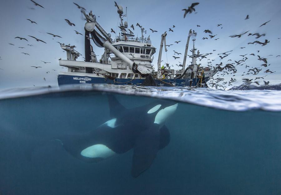 Wildlife Photographer of the Year 2016 - The Atlantic
