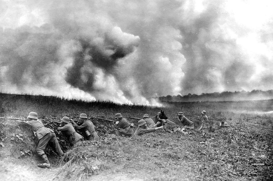 World War I in Photos: Animals at War - The Atlantic