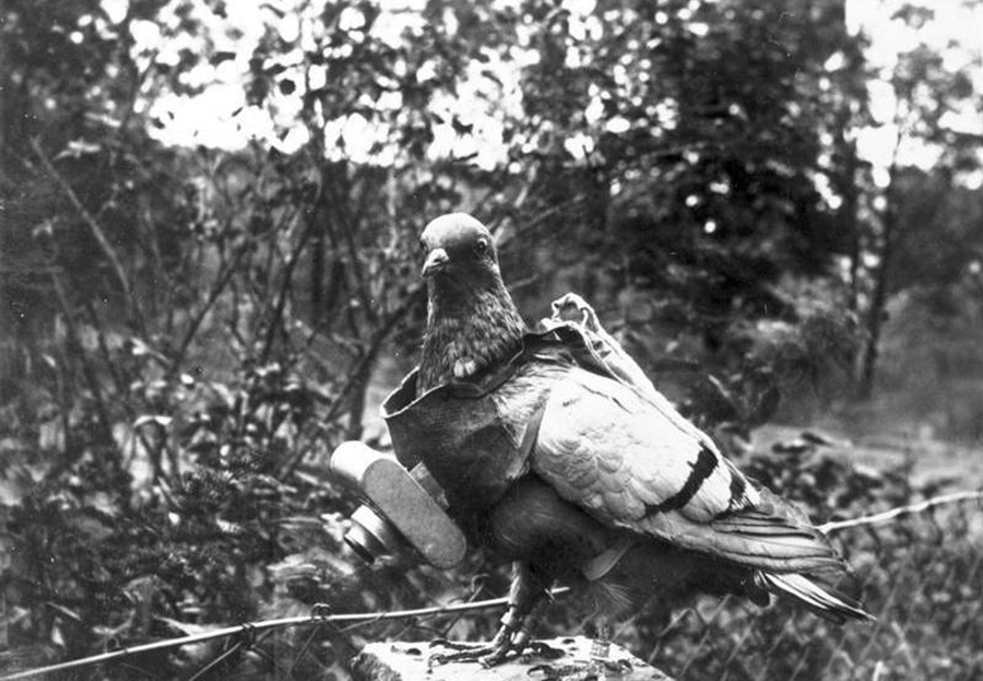 The trained birds were used experimentally by German citizen Julius Neubronner, before and during the war years, capturing aerial images when a timer ...