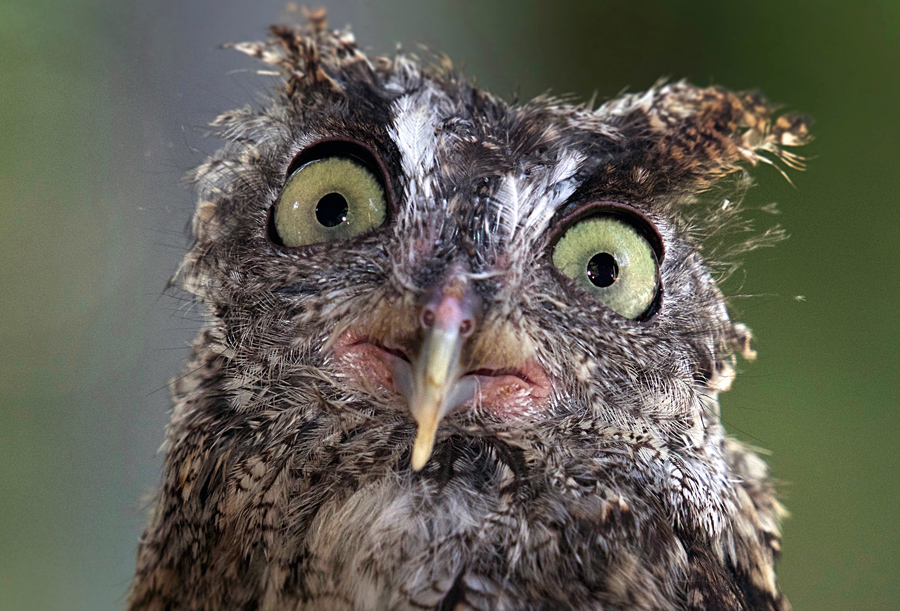 Superb Owl Sunday - The Atlantic