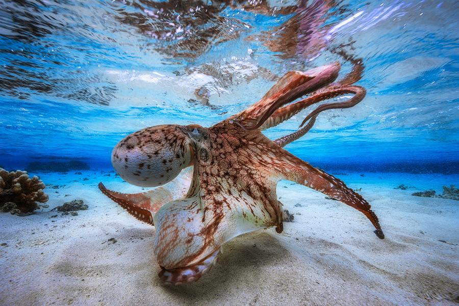 Resultado de imagen de underwater photographer 2017