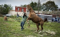 The stallion Dusty rears up as Jamil Prattis, 25, leads him to the lot across from the Fletcher Street Stables.