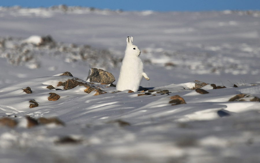 NASA冰桥行动(Operation IceBridge)观测北极海冰变化 - wuwei1101 - 西花社
