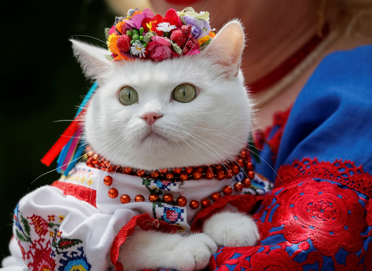 Cattery in Kiev and the region: a selection of sites