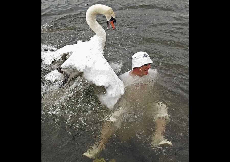 swan upping on the river thames the atlantic