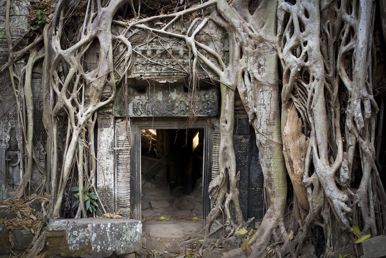 树木和森林 - wuwei1101 - 西花社