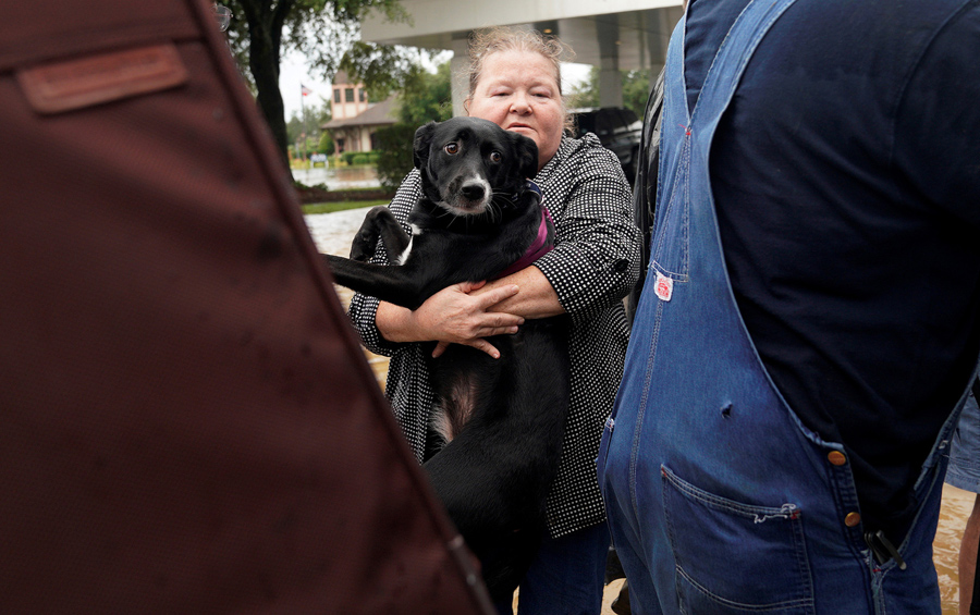 Photos Pet Rescues In Harvey S Wake The Atlantic