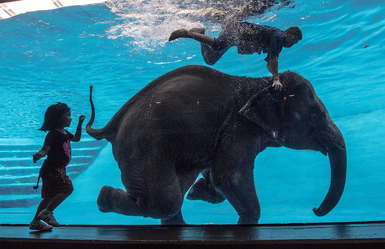 2017 世界大象日 - wuwei1101 - 西花社